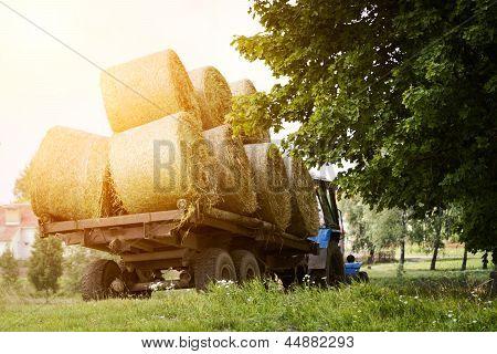 Farmers Harvesting Hay