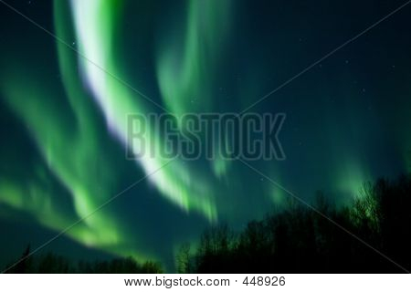 Colors Of The Northern Lights Over Trees