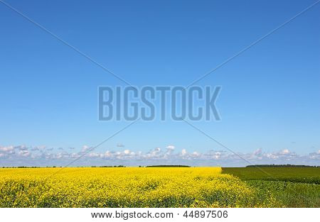 Yellow and green agricultural land