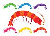 Vector cartoon prawns or shrimp in a variety of bright colours on a white background. poster