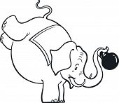 Circus elephant standing on foreleg and holding a dumb bell poster