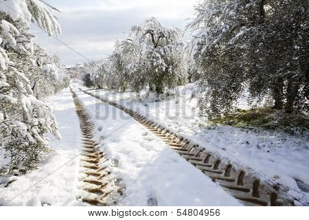 Tractor Imprints   On A Country Road In Snow