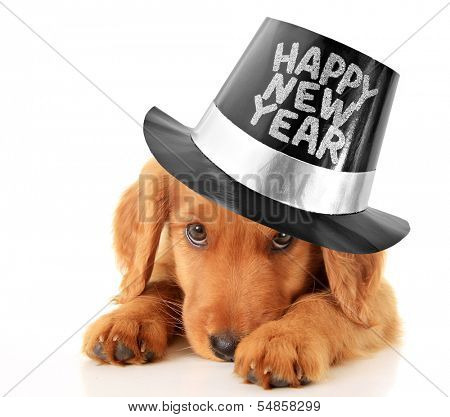 Shy puppy wearing a Happy New Year top hat. poster