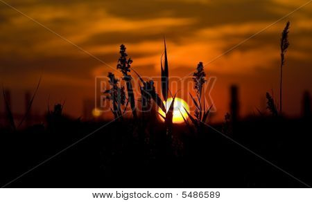 Tallgrass At Sunset