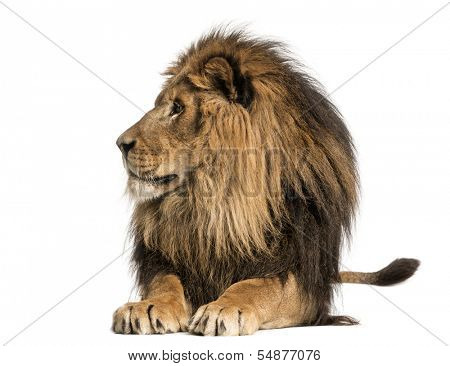 Lion lying, looking away, Panthera Leo, 10 years old, isolated on white