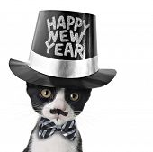 Cute black and white kitten with moustache, bow tie and Happy New Year hat.  poster