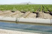 an irrigation ditch along the edge of a corn field in the arizona desert. poster