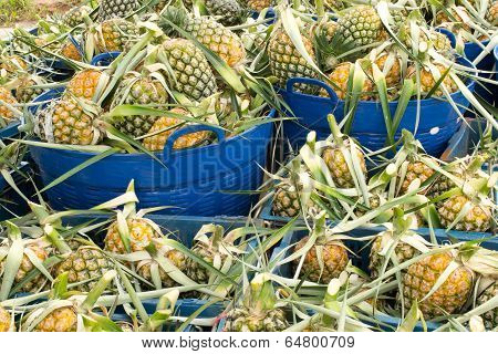 A market stall offers fresh ripe pineapples for sale