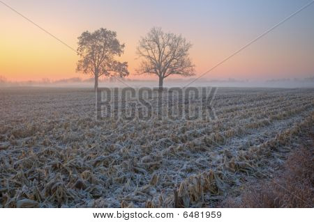 Dawn Landscape of Corn Field