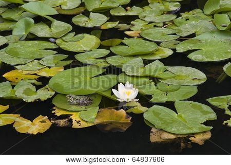 Lily and a Frog