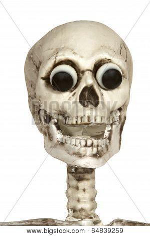 Skeleton Head with Eyeballs