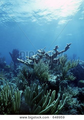 Elkhorn Reef