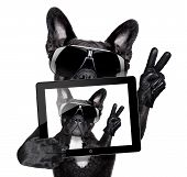 french bulldog making a selfie with tablet pc poster