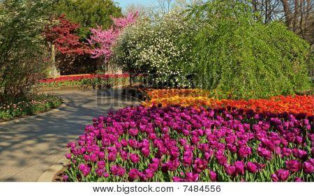 A flower garden in bloom