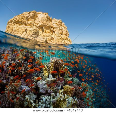 Split shot of the bright coral reef in Ras Mahammad National Park, Red Sea, Egypt