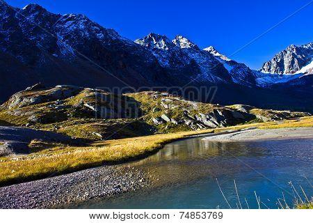 High Moss in the high mountains Alps - Stubaital