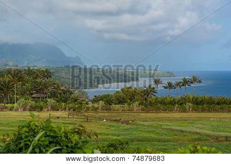Kilauea Bay, Hawaii