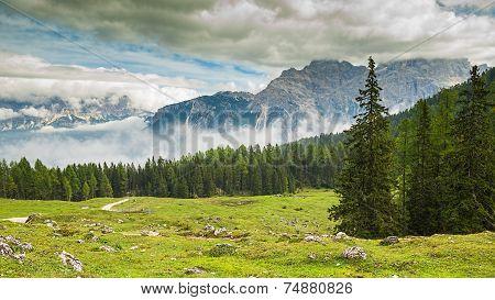 taly Dolomites - a wonderful landscape meadow among pine