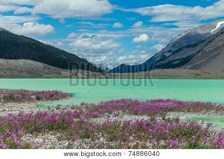 Purple Fields