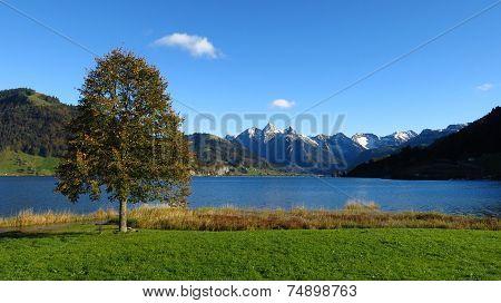 Tree At Lake Sihlsee