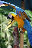 Closeup of colorful parrot captured at Florida. poster