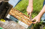 Cropped image of beekeeper removing honeycomb frames from crate at apiary poster