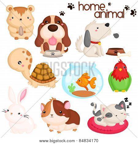 Home Animal