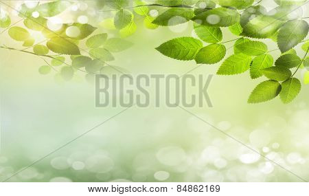 Eco nature green and blue abstract defocused background with sunshine