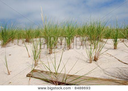 Jones Beach Dunes