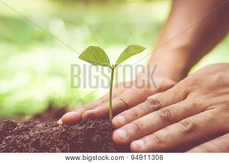 growing and nurturing a young plant