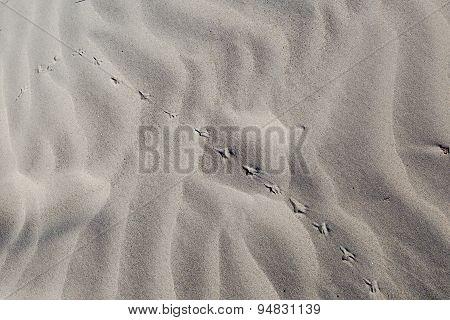 Spoor On Sand
