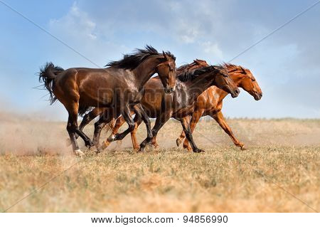 Horse herd run with dust