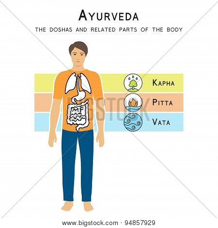 Ayurveda doshas and related parts of the body