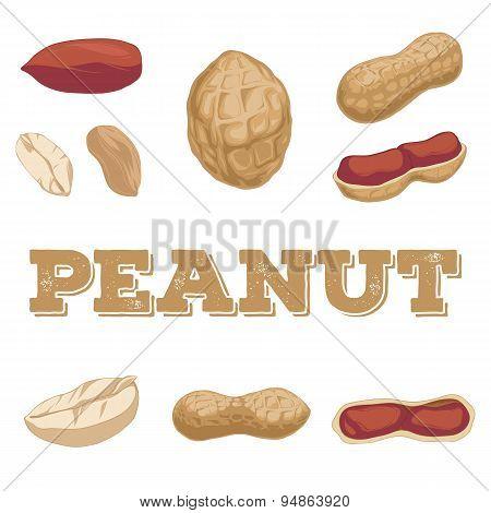 Peanut Set.hand Drawn Peanuts.