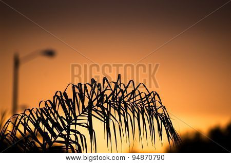 Orange Sunset Behind A Palm Tree