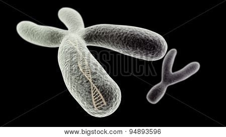 X Chromosome With Dna Helix Inside And Y On The Close Up Version