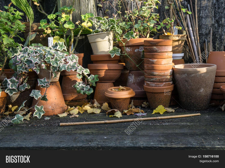 Romantic Idyllic Plant Image & Photo (Free Trial)   Bigstock