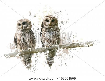 Digital Painting of Barred Owls
