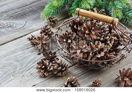 Christmas concept: full basket of pine cones and spruce branches on the background of old unpainted wooden boards