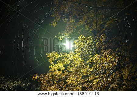 Glowing streetlight surrounded by foliage and branches in the night