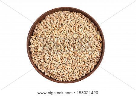Spelt grain (dinkel wheat) in wooden bowl isolated on white background