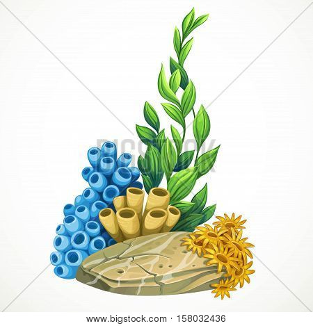 Marine Algae, Sponges And Anemones Growing On A Rock Sea Life Object Isolated On White Background