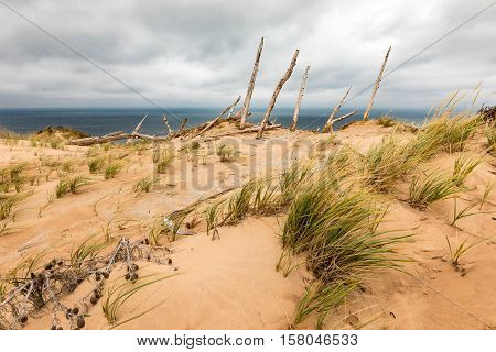 Ghorst Forest at Sleeping Bear Dunes National Lakeshore. Lake Michigan can be seen in the background and wind blown dune grass in the fore.