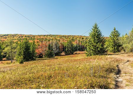Dolly sods meadow and trail path during autumn in West Virginia