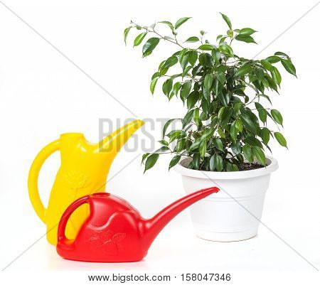 Two Plastic Watering Cans And Plant In A Pot