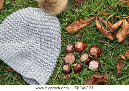The season of chestnuts. Chestnuts on the grass with hat.