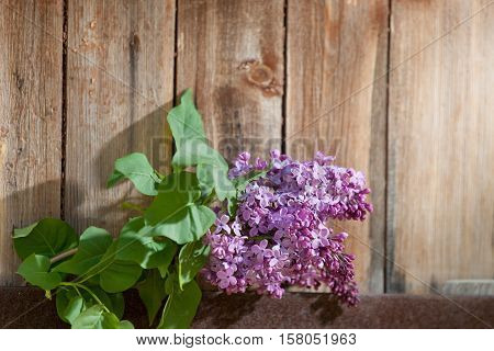Lilac Branch At The Wooden Background