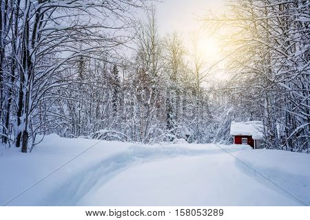 Winter forest with road and sunlight, big trees  covered snow, beautiful season landscape