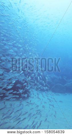 Bank Os Fish