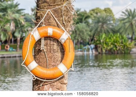 Orange life buoy is hanging in national green park safety and security concept.